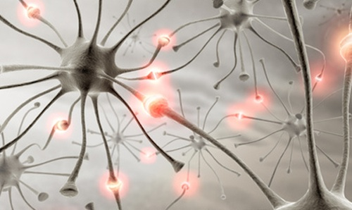 Neural stem cell therapy