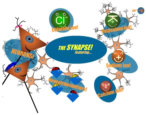 The Synapse