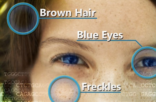 Brown hair blue eyes freckles